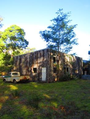 dappled tree house