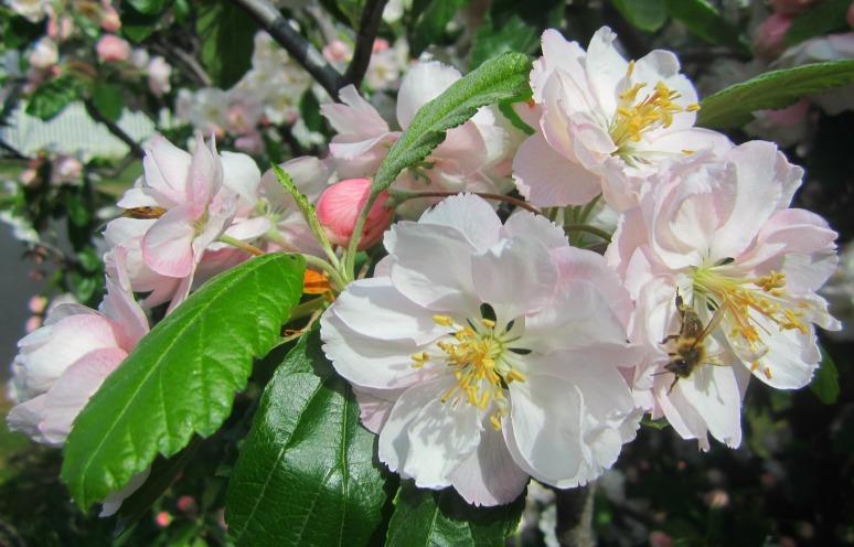 Blossoms abuzz
