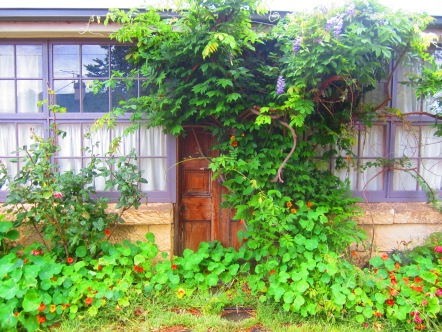 'In Dorothy's Garden'