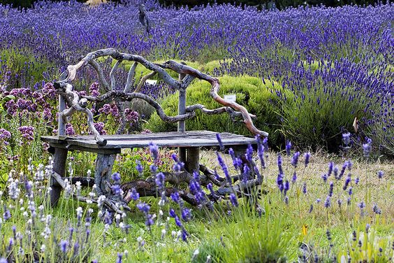 twig-bench-lavendar